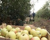 Emirati zainteresovani za srpski agrar