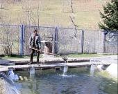 Osvežavanje ribljeg fonda