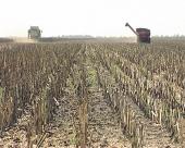 Poljoprivredni proizvod kao zalog