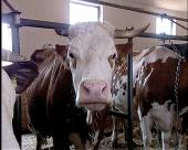 Prevelika upotreba antibiotika na farmama