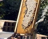 15.000 evra za pčelare
