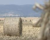 Veliki potencijal biomase