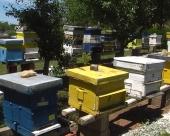 Pčelarstvo-profitabilno zanimanje
