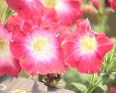 Srbija u cveću