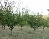 Biološka rekultivacija zemljišta kroz praksu