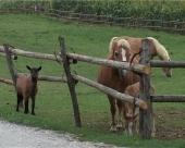 Budući poljoprivrednici u poseti Nemačkoj