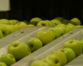 Jabuka iz Srbije postavlja svetske standarde