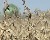 Srbija može u EU samo uz GMO?
