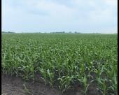 Biopesticidi u organskoj poljoprivredi