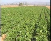 Gajenje povrća na otvorenom