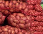 Suša kumovala uvozu  100 tona krompira