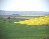 Prednost proizvodnje uljane repice