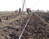 Subvencije za niške voćare i vinogradare