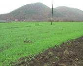 Oprečna mišljenja o mogućnostima Srbije u poljoprivredi