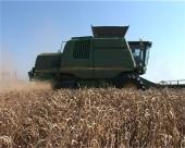 Pšenica ostvarila nadprosečne rezultate
