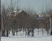 Zimsko mirovanje voćaka