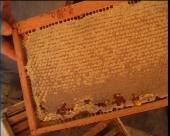 Podrška razvoju pčelarstva