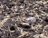 Koliki je pad plodnosti zemljišta?