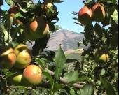 Šarenoliki poljoprivredni prihodi u Šumadiji