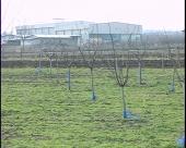 Gajenje šljive glavni izvor prihoda