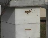 Donacije za pčelare u pravi čas