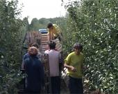 Radni staž i za sezonske radnike