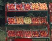 Turci ulažu u preradu voća
