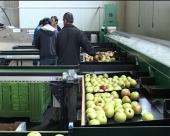 Srbiji dostupni fondovi EU za poljoprivredu