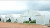 Gajenje povrća u plastenicima profitabilnije