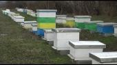 Za mlade posao u pčelarstvu
