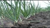 Beč podstiče poljoprivredu na istoku Srbije