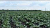 FAO pomaže srpski agrar