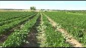 Povrće na 130.000 hektara