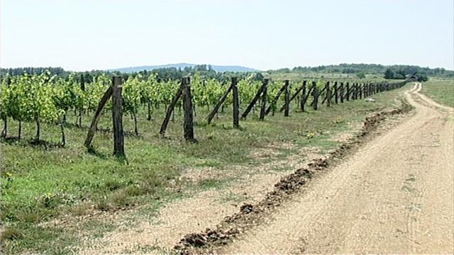 Povratak vinogradarstvu