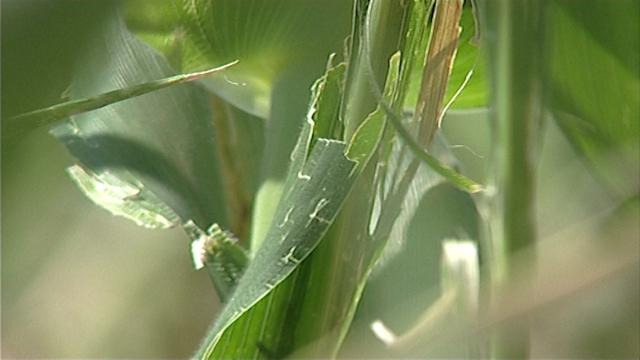 Važno je da poljoprivrednici osiguraju useve