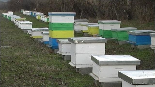 Šansa za 252 pčelara početnika