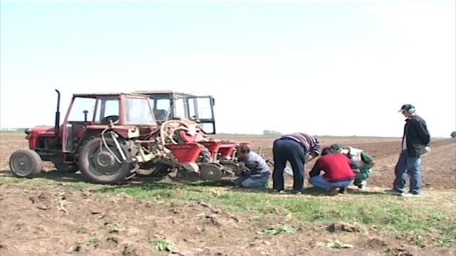 Predstoji setva kukuruza