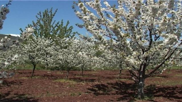 Subvencije za pčelare i voćare