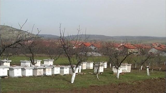 Apel pčelara
