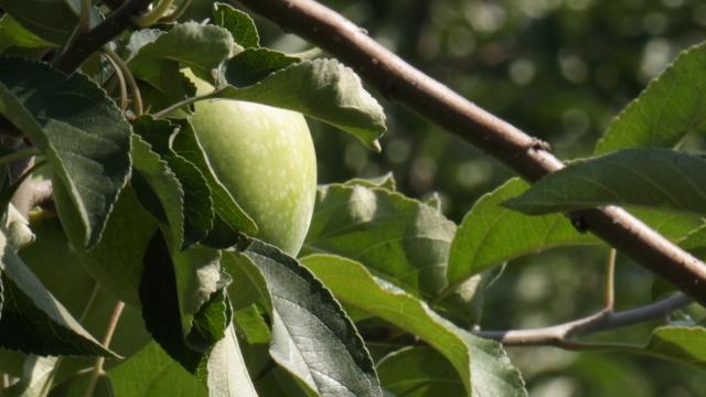 Problem plasmana robe za voćare i povrtare