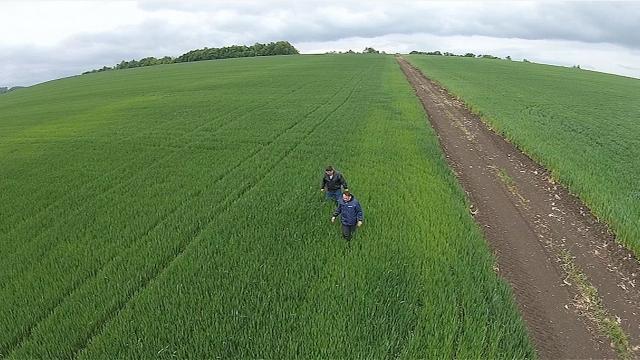 Zaštita pšenice