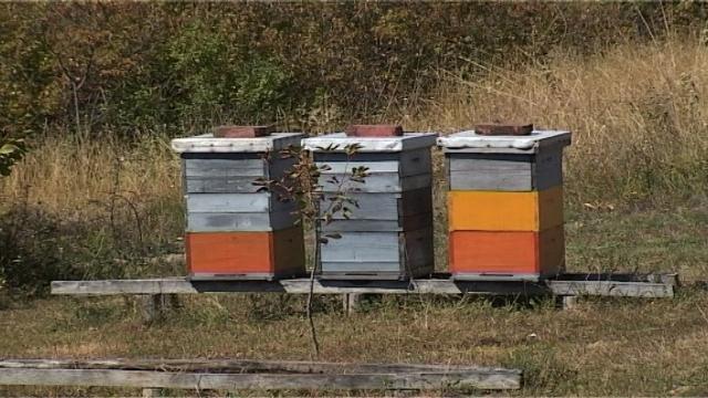 Upozorenje pčelarima