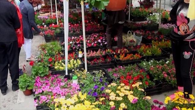 50 izlagača cveća