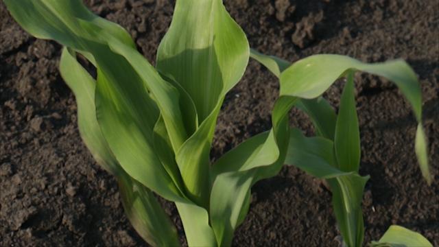 Proizvodnja semenskog useva