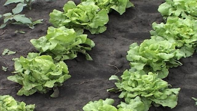 Šansa u organskoj proizvodnji