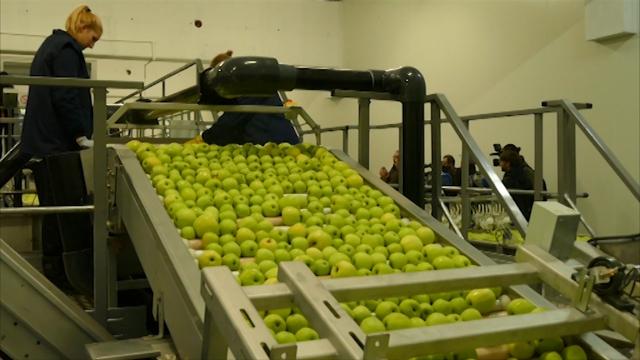 Obezbedjen plasman jabuke