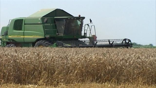 """Pšenica """"na zeleno"""""""