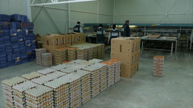 Proizvodnja konzumnih jaja