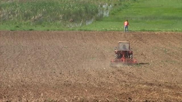 Umanjeni prinosi pšenice