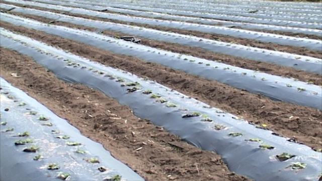 Kreiranje jedinstvene agrarne politike